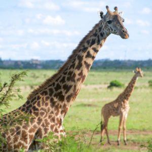 Day tours in Nairobi