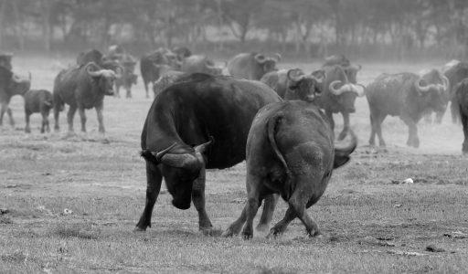 wildlife-masai mara
