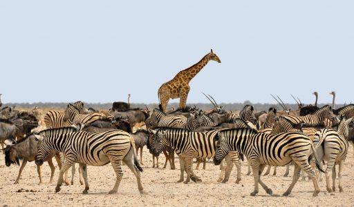 masai mara safari